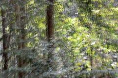 Abstrakt rörelsesuddighet, trädstam & tjänstledigheter, backgrou för gul gräsplan Royaltyfria Foton