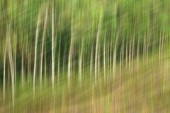 Abstrakt rörelsesuddighet, trädstam & tjänstledigheter, backgrou för gul gräsplan Arkivbild
