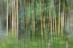 Abstrakt rörelsesuddighet, trädstam & tjänstledigheter, backgrou för gul gräsplan Royaltyfri Fotografi