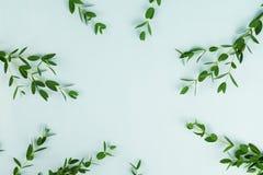 Abstrakt ram av gröna eukalyptusfilialer Royaltyfria Foton