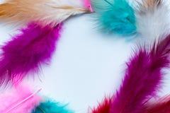 Abstrakt ram av kulöra fjädrar Royaltyfri Bild