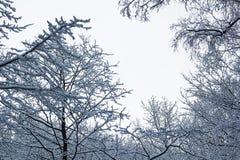 Abstrakt ram från filialer i snö Fotografering för Bildbyråer