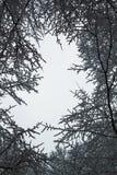 Abstrakt ram från trädfilialer, vinterdag Royaltyfria Bilder