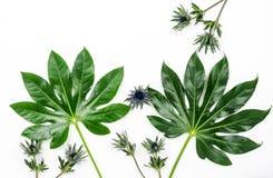 Abstrakt ram som göras av gröna tropiska sidor Royaltyfria Bilder