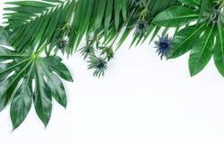 Abstrakt ram som göras av gröna tropiska sidor Fotografering för Bildbyråer