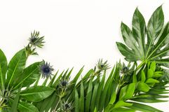 Abstrakt ram som göras av gröna tropiska sidor Royaltyfri Bild