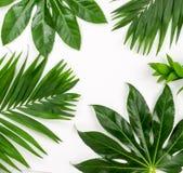 Abstrakt ram som göras av gröna tropiska sidor Royaltyfri Fotografi
