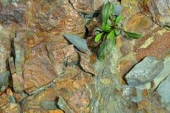 Abstrakt Rockowa tekstura z Zieloną rośliną Zdjęcie Royalty Free