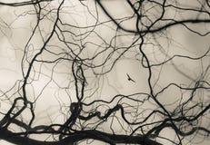 Abstrakt rozgałęzia się tło z ptakiem Fotografia Royalty Free