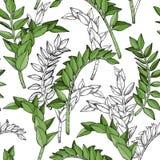 Abstrakt sömlös modell med växtnaturbevekelsegrunder Royaltyfria Bilder