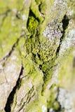 Abstrakt sammansättning med grön mossa på trädskäll Royaltyfri Fotografi