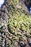 Abstrakt sammansättning med grön mossa på trädskäll Royaltyfria Bilder