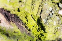Abstrakt sammansättning med grön mossa på trädskäll Arkivfoto