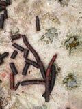 Abstrakt sammansättning med palmyraen gömma i handflatan kottar på vått golv under att regna arkivbild