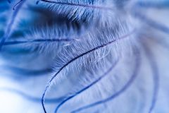 Abstrakt sammansättning med torkat klematisfrö och ljus Royaltyfri Fotografi
