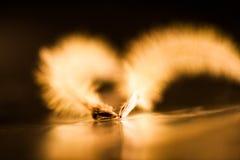 Abstrakt sammansättning med torkat klematisfrö och ljus Arkivfoto