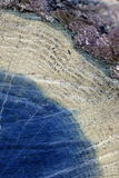 Abstrakt sammansättning med wood textur från trädstammar med skrapor och sprickor, inverterade färger Royaltyfri Bild