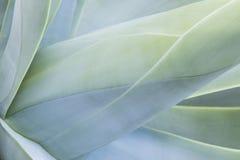 Abstrakt sikt av en suckulent växt Arkivfoto