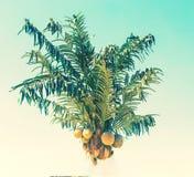 Abstrakt sikt av palmträdet Blåtthav, Sky & moln gömma i handflatan tropiskt Arkivfoto