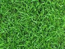 abstrakt sikt för textur för park för lawn för green för bakgrundsstadsgräs Royaltyfri Fotografi