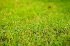 abstrakt sikt för textur för park för lawn för green för bakgrundsstadsgräs element för klockajuldesign arkivfoto
