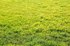 abstrakt sikt för textur för park för lawn för green för bakgrundsstadsgräs Härligt ljust - grönt fält Royaltyfria Foton