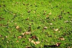 abstrakt sikt för textur för park för lawn för green för bakgrundsstadsgräs royaltyfria bilder