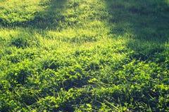 abstrakt sikt för textur för park för lawn för green för bakgrundsstadsgräs fotografering för bildbyråer