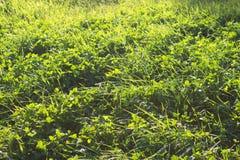 abstrakt sikt för textur för park för lawn för green för bakgrundsstadsgräs arkivfoton