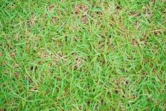 abstrakt sikt för textur för park för lawn för green för bakgrundsstadsgräs royaltyfri foto