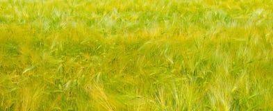 abstrakt sikt för textur för park för lawn för green för bakgrundsstadsgräs Brett foto royaltyfri fotografi