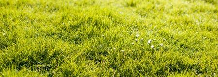 abstrakt sikt för textur för park för lawn för green för bakgrundsstadsgräs element för klockajuldesign baner arkivfoto