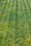 abstrakt sikt för textur för park för lawn för green för bakgrundsstadsgräs Golf- eller fotbollfält Ängen eller betar område på s fotografering för bildbyråer
