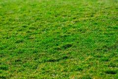 abstrakt sikt för textur för park för lawn för green för bakgrundsstadsgräs Golf- eller fotbollfält selektivt arkivbilder