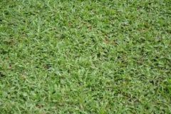 abstrakt sikt för textur för park för lawn för green för bakgrundsstadsgräs Grön gräsmattatexturbakgrund arkivbilder