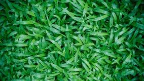 abstrakt sikt för textur för park för lawn för green för bakgrundsstadsgräs Mattgräs royaltyfria foton