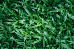 abstrakt sikt för textur för park för lawn för green för bakgrundsstadsgräs Mattgräs arkivbilder