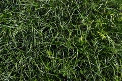 abstrakt sikt för textur för park för lawn för green för bakgrundsstadsgräs Textur för naturlig bakgrund arkivfoton