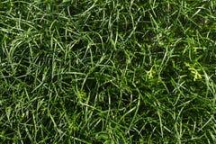 abstrakt sikt för textur för park för lawn för green för bakgrundsstadsgräs Textur för naturlig bakgrund fotografering för bildbyråer