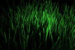 abstrakt sikt för textur för park för lawn för green för bakgrundsstadsgräs arkivfoto