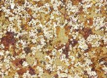 abstrakt sjösidatextur Fotografering för Bildbyråer
