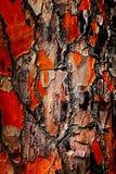 Abstrakt skällbakgrund Arkivfoto