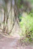 Abstrakt skog med den lilla gröna grodden och vandringsledet Fotografering för Bildbyråer