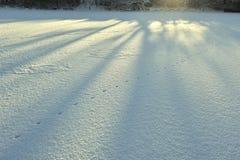 Abstrakt snödetalj, modell Raka linjer av blåa långa skuggor av träd på den vita orörda nya snön Royaltyfria Bilder