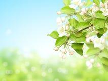 Abstrakt solig suddighetsvårbakgrund med blommor av äpplet royaltyfri foto