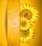 Abstrakt solrosbakgrund Arkivfoton