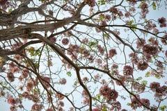 Abstrakt som stängs upp trädbakgrunder i blå himmel, upp sikt arkivfoton