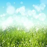 Abstrakt sommar- eller fjädernaturbakgrund Fotografering för Bildbyråer