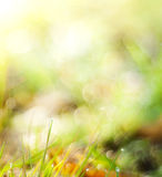 abstrakt sommar för bakgrundsnaturfjäder Fotografering för Bildbyråer