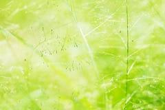 abstrakt sommar för bakgrundsnaturfjäder Arkivfoton